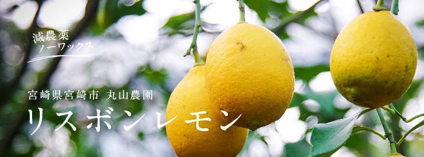 宮崎県宮崎市 丸山農園の有機レモン