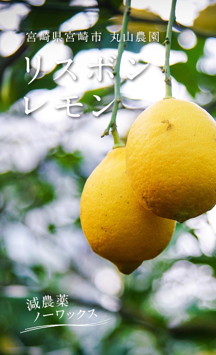 熊本県三角町 高岡オレンジ園の有機レモン
